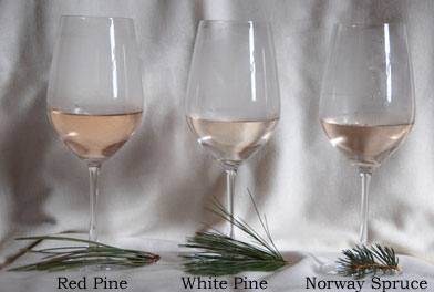 whiteredspruce