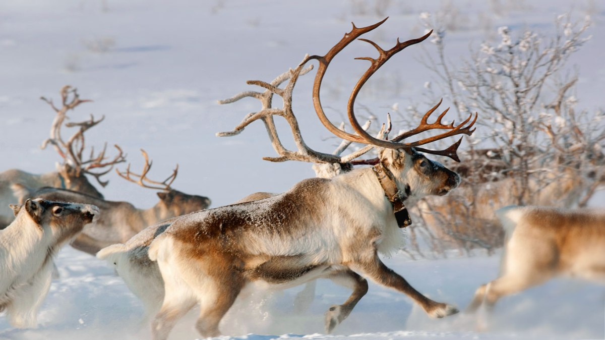 Doe, A Deer, A Female Deer: The Spirit of Mother Christmas