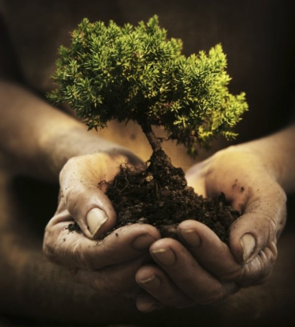 hands-holding-a-small-tree-hidesy-opt688x764o00s688x764