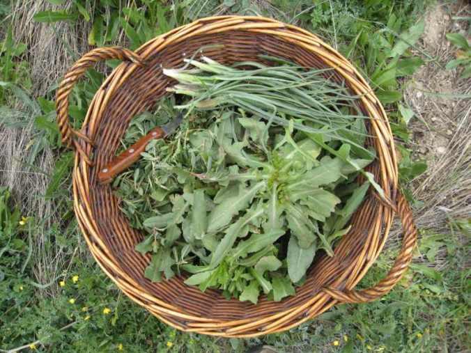 wild-herbs