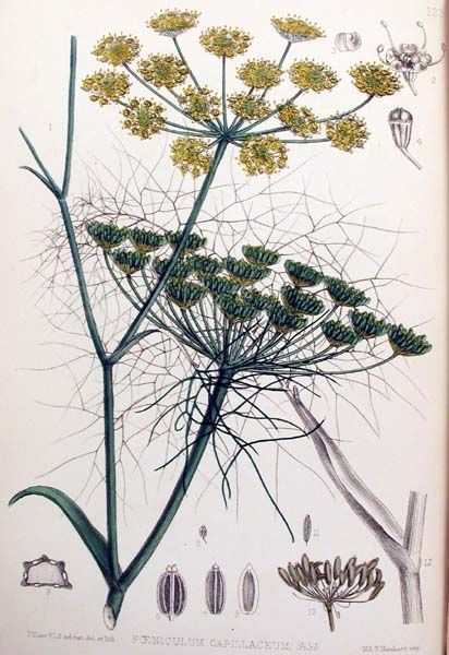 historical_FENNEL