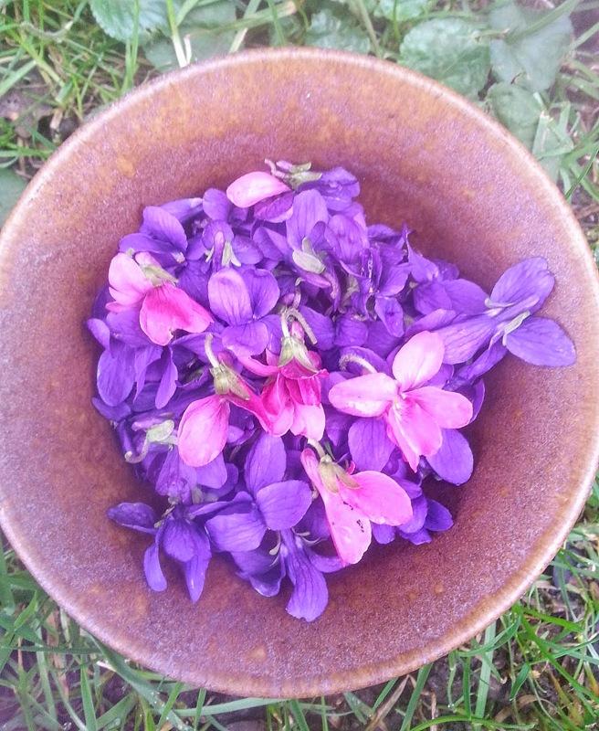violet201.jpg