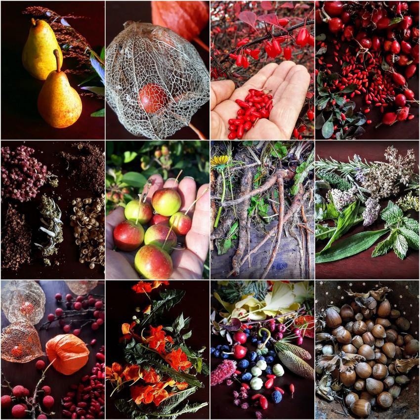 autumn harvest17.jpg