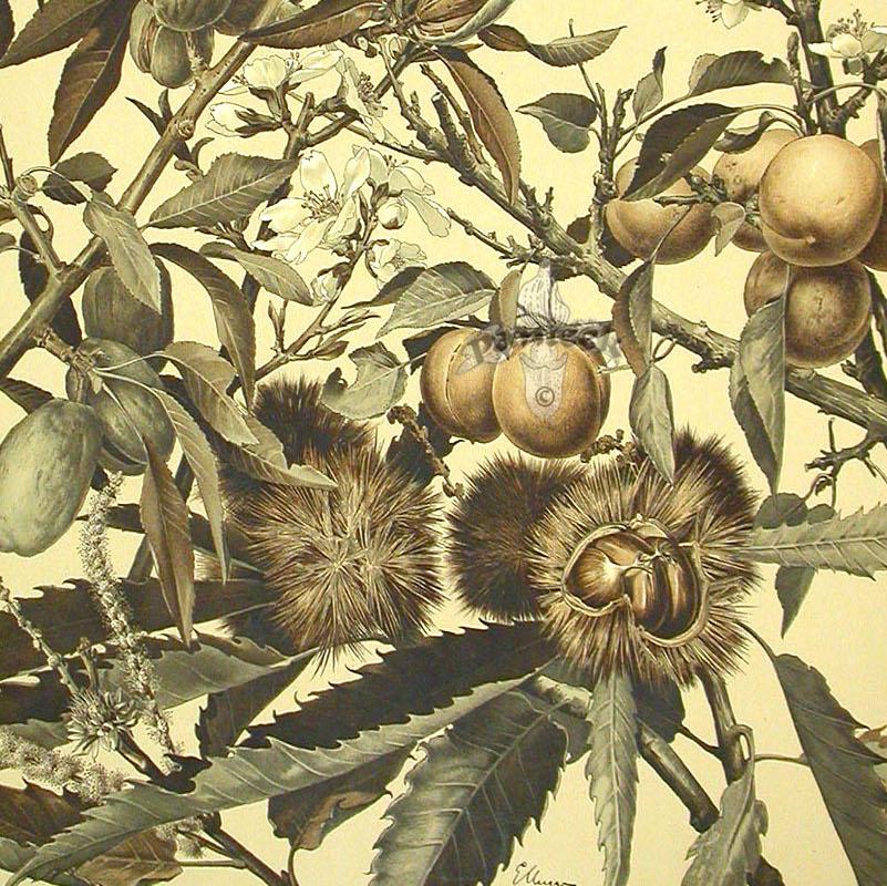 detail Anton Seder's chestnut